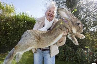 le plus gros lapin