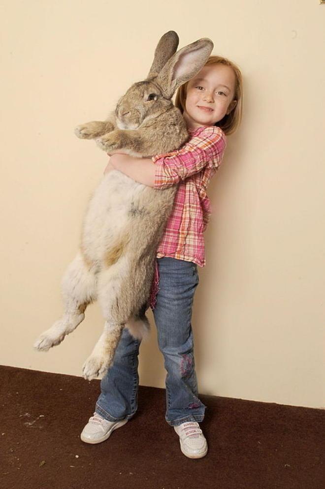 Jeff le lapin le plus gros du monde